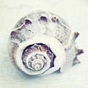Whitewashed Seashell 92 Art Print