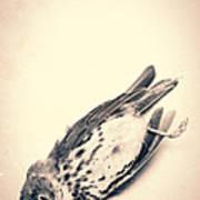 Who Killed Cock Robin Art Print