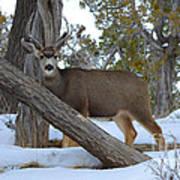 Who Me?  Oh Deer Art Print