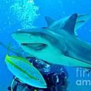 Who Said Sharks Were Mean Art Print