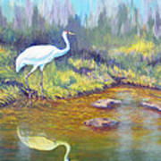 Whooping Crane - Searching For Frogs Art Print