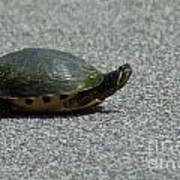 Why Did The Turtle Cross The Road Art Print
