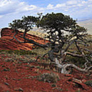 Wicked Tree And Red Rocks Art Print by Roger Snyder