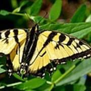 Wild Butterfly Art Print