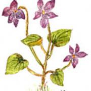 Wild Dog Violet Art Print
