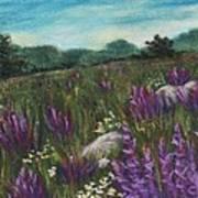 Wild Flower Field Art Print