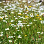 Wild Flower Meadow Art Print