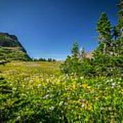 Wild Flowers Glacier National Paintedpark   Art Print by Rich Franco