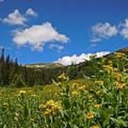 Wild Flowers In Rocky Mountain National Park Art Print