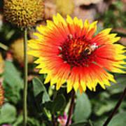 Wild Flowers Sierra Ancha Mountains Art Print