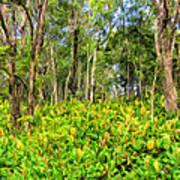 Wild Ginger And Ohia Trees Art Print