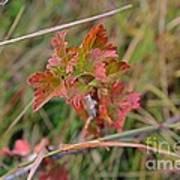 Wild Gooseberry Leaves Art Print