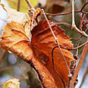 Wild Grapevine Leaf Art Print
