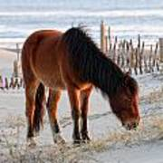 Wild Horse At Sunrise Art Print