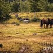 Wild Horse Band In Kananaskis Country Art Print