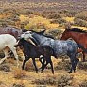 Wild Horse Family Art Print