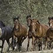 Wild Horse Herd Art Print