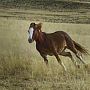 Wild Horse Running-signed-#7273 Art Print