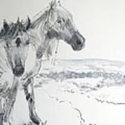 Wild Horses Drawing Art Print