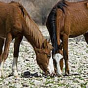 Wild Horses Grazing  Art Print