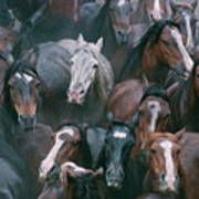 Wild Horses In A Pen Art Print