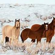 Wild Horses Art Print