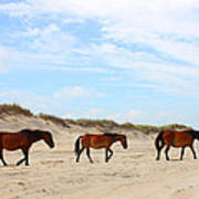 Wild Horses Of Corolla - Outer Banks Obx Art Print