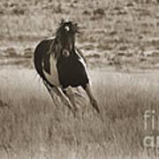 Wild Horses-sepia-signed-#7288 Art Print
