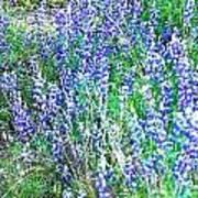 Wild In Blue Art Print