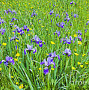 Wild Iris Patch Art Print