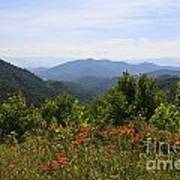 Wild Lilies With A Mountain View Art Print