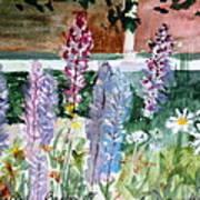 Wild Lupine In Barton Vermont Art Print