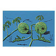 Wild Melon Art Print by N Ditsheko