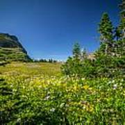 Wild Mountain Flowers Glacier National Park   Art Print