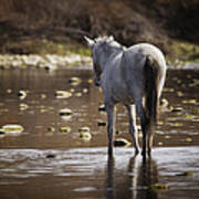 Wild Mustang On The River  Art Print