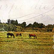 Wild Mustangs Carpe Diem Art Print