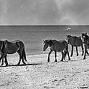 Wild Mustangs Of Shackleford Art Print