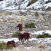 Wild Nevada Mustangs 2 Art Print