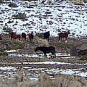 Wild Nevada Mustangs Art Print