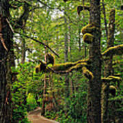 Wild Pacific Trail Art Print