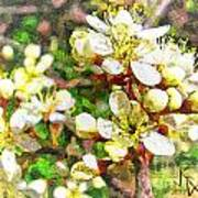 Wild Plum Flower Art Print