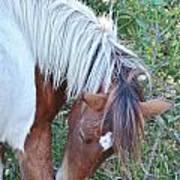 Wild Ponies Of Assateague 21 Art Print
