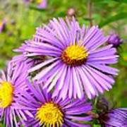 Wild Purple Asters Art Print