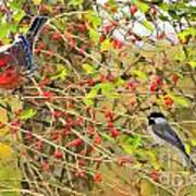Wild Red Berrie Bush With Birds - Digital Paint Art Print