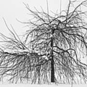 Wild Springtime Winter Tree Black And White Art Print by James BO  Insogna