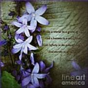 Wild Star Flowers And Innocence  Art Print