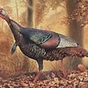 Wild Turkey Art Print by Hans Droog