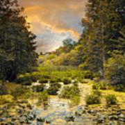 Wild Wetlands Art Print