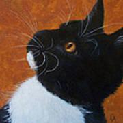 Wild Whiskers Art Print