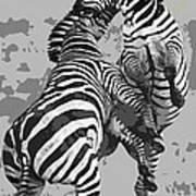 Wild Zebras Art Print